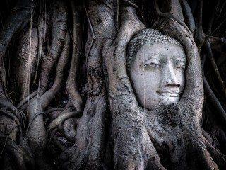heckels.photography_buddha_tree