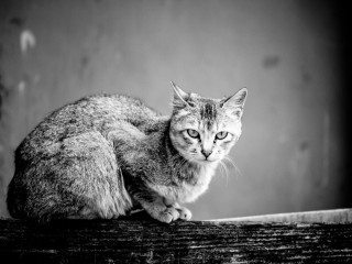 heckels.photography_cat
