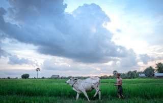Farmer works in paddy field with dramatic sky at sunrise by Graeme Heckels Travel Photography