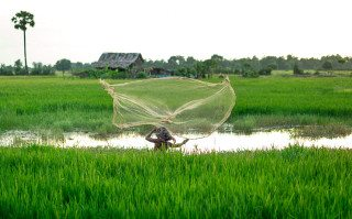 Casting Fishing net in Siem Reap Countrside by Graeme Heckels Travel Photography