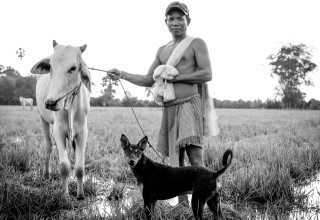 Portrait of a Cowboy with his Cow & Dog in Siem Reap Countryside by Graeme Heckels Travel Photography