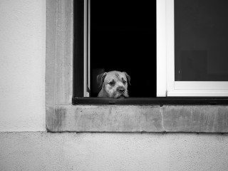 Woof Dog portrait in Lisbon by Graeme Heckels Travel & Street Photography