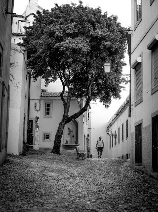 Tree of Life in Lisbon by Graeme Heckels Travel & Street Photography