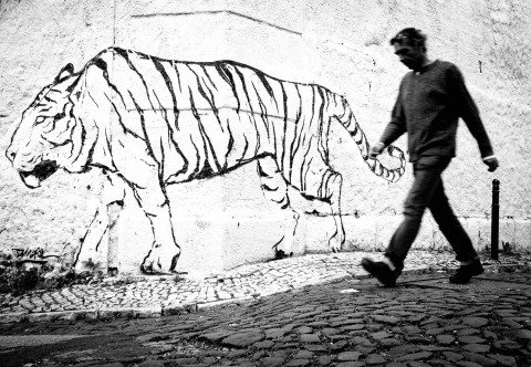 Walk the Tiger in Lisbon by Graeme Heckels Travel & Street Photography