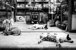 Sleeping Soi Dogs in Bangkok by Graeme Heckels Street & Travel Photography