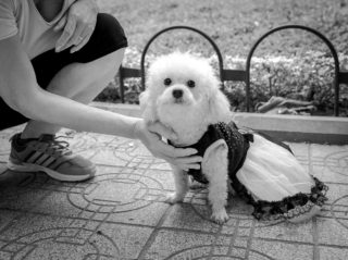 Black and White photo by Graeme Heckels Hanoi Street Photography Fluffy Puppy
