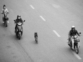 Graeme Heckels Hanoi Street Photography Dog Walks Hanoi Motorbike Traffic